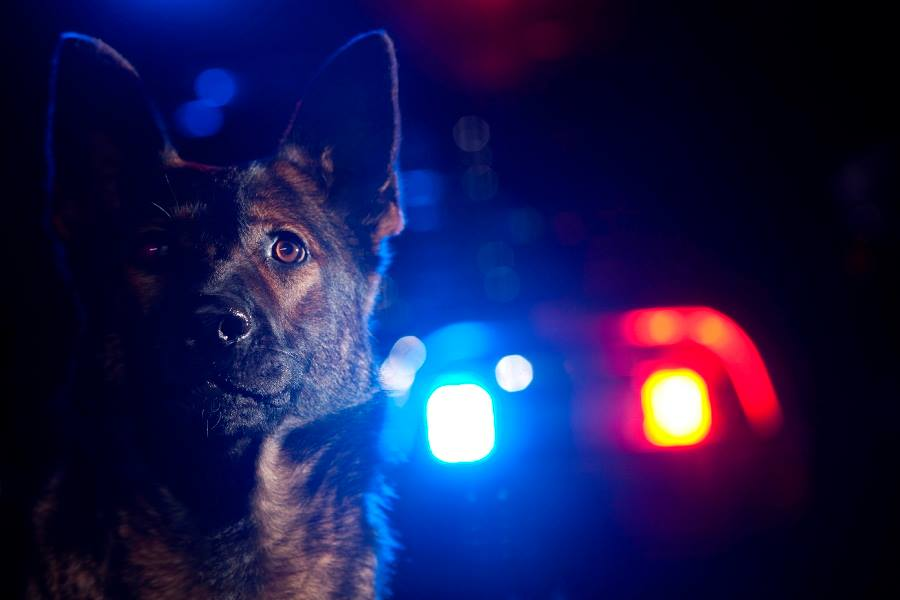 Chesterfield Police Receive Sizeable Donation For K9 Program