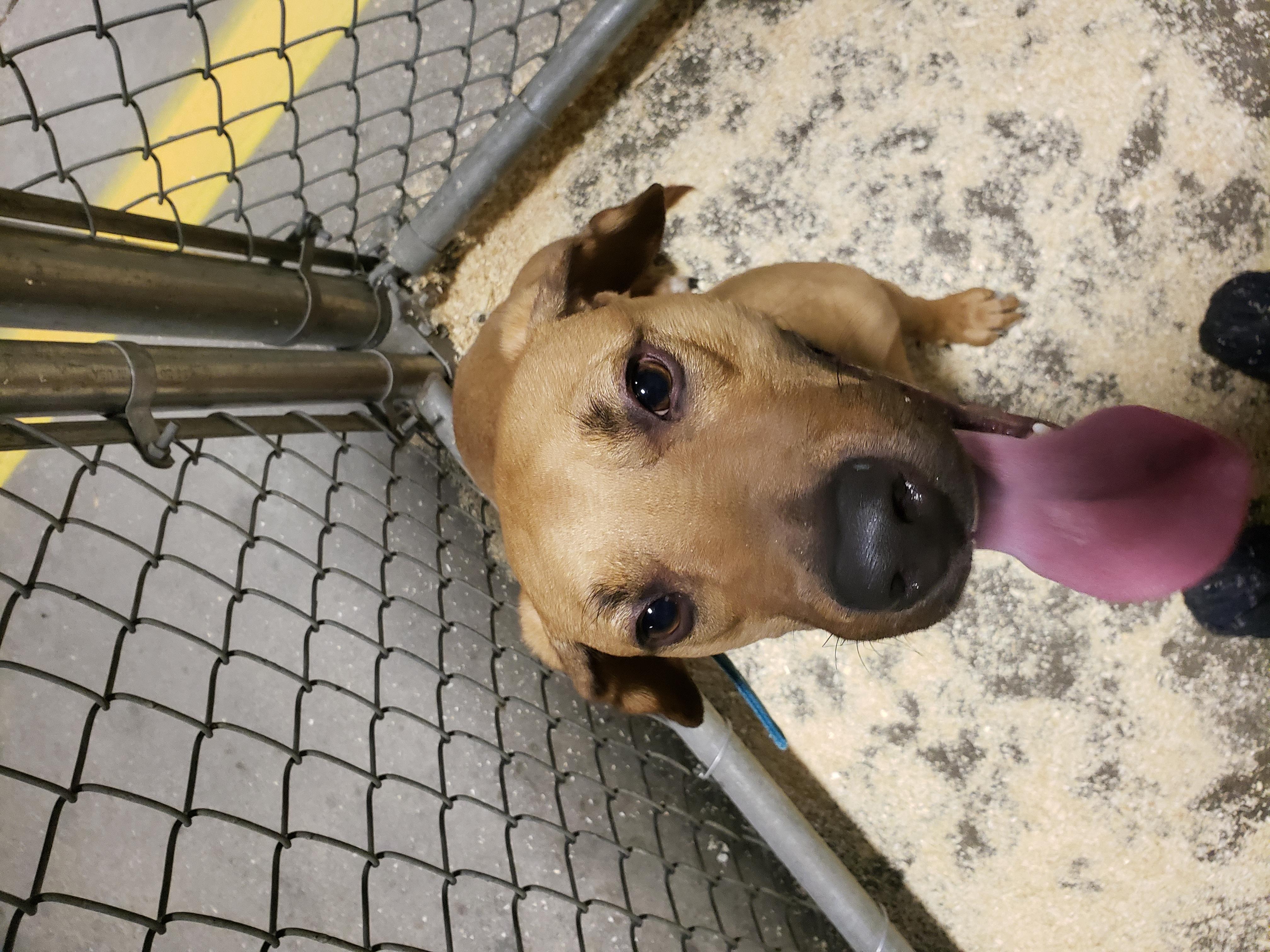 Found dog 8-28-2018